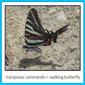 Learn Wildlife Words in Spanish, Book 7
