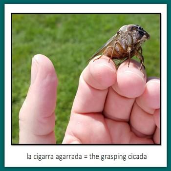 Learn Wildlife Words in Spanish, Book 8