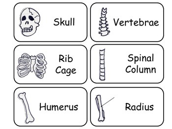 Learn Your Bones Flash Cards. Preschool Human Anatomy flash cards.