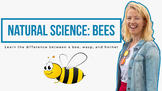 Learn about Bees, Wasps & Hornets: Primary School Science