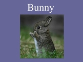 Learn about Bunnies!