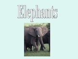 Learn about Elephants!