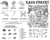 Learn about the Rain Forest