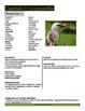 Learner's Guide to Ciudad de las bestias