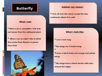 Learning About Insects; Butterflies, Grasshoppers, Ants, Bees, Ladybugs, Firefly
