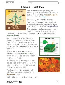 Learning About Leaves Lesson Plan Grade 6