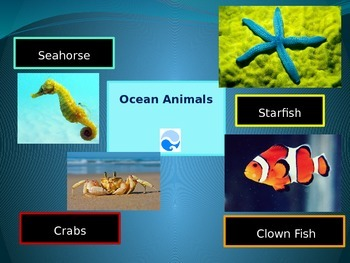 Learning About Ocean Animals; Crabs, Starfish, Sea Horse, Clown Fish