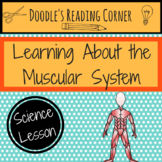 Learning About the Muscular System