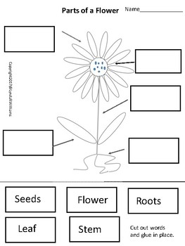 Learning Cycle for Kindergarten Parts of Plants