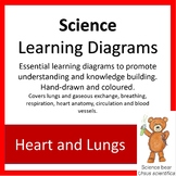 Learning Diagrams - Heart and Lungs