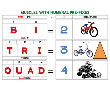 Learning Numeral Prefixes