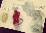 Learning Osmosis Through Gummy Bears Science Experiment: Editable Version
