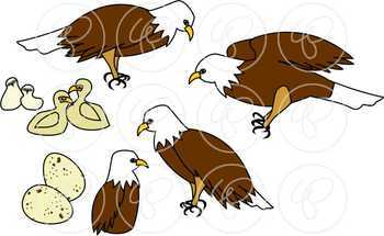 Learning about Eagles Clipart by Poppydreamz