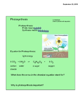 Learning about Plants & Photosynthesis