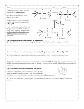 protein structure worksheet resultinfos. Black Bedroom Furniture Sets. Home Design Ideas