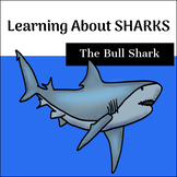 Learning about Sharks - The Bull Shark