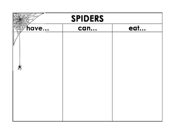 Learning about Spiders - Label a Spider