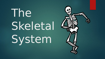 Learning about the Skeletal System!