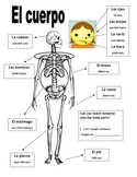 Learning the Body Parts in Spanish