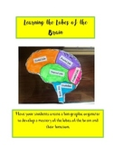 Learning the Lobes of the Brain Foldable Activity with Quiz and Key