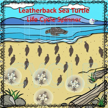 Leatherback Sea Turtle (Life Cycle Spinner)