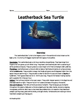 Leatherback Sea Turtle - Review Article - Facts Info Questions Vocabulary