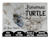 Leatherback Turtle: A Research Project