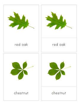 Leaves 3-Part Nomenclature Cards- Montessori