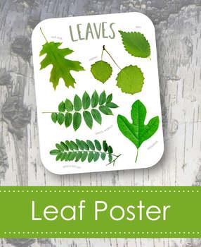 "Leaves 8x10"" Poster- Montessori"