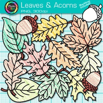 Autumn Leaves and Acorns Clip Art {Great for Classroom Decor & Worksheets}