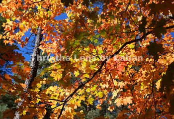 Leaves Changing Fall Color Stock Photo #248