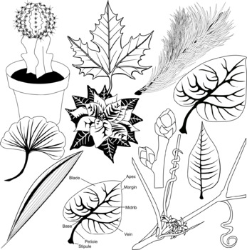 Leaves Clip Art - 20 % Off New Item Discount
