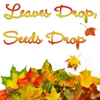 Teaching Seasons (Autumn/Fall) - MP3 Song with Lyrics & Activities