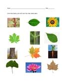 Leaves Identification