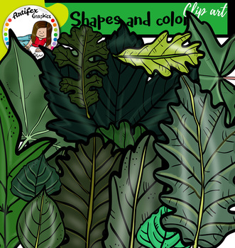 Leaves, shapes and colors