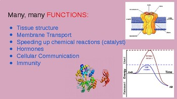 Lecture Slides 1.4 and 1.5 Proteins