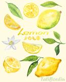 Lemon Watercolor Clip Art