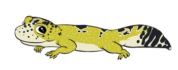 Leopard Gecko Clipart + Lineart - Commercial Use OK