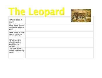 Leopard Graphic Organizer