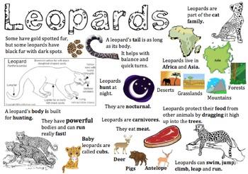 Leopard Information Report Visual