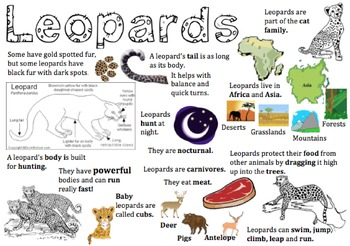 Leopard Information Report Visual