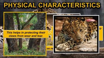 Leopards - PowerPoint