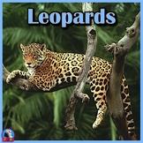 Leopards - PowerPoint & Activities
