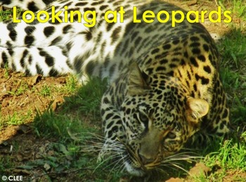 African Cats: Leopard - PDF presentation