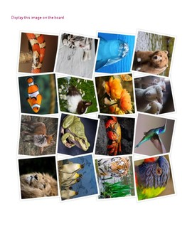 Les Animaux - French Animals