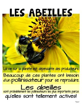 Bees Mini Unit in French • Les abeilles