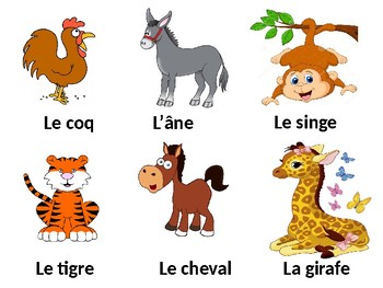 Les animaux / Animals / Pets
