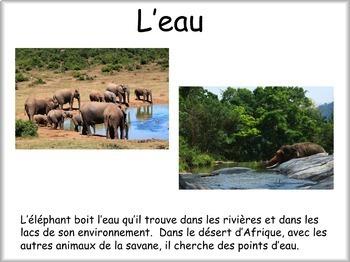 Les animaux: L'éléphant
