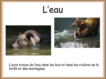 Les animaux: L'ours