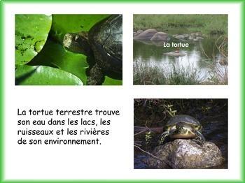 Les animaux: La tortue